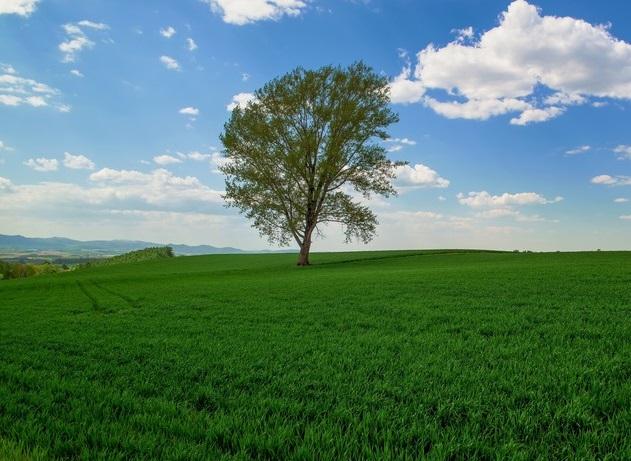 美瑛の哲学の木